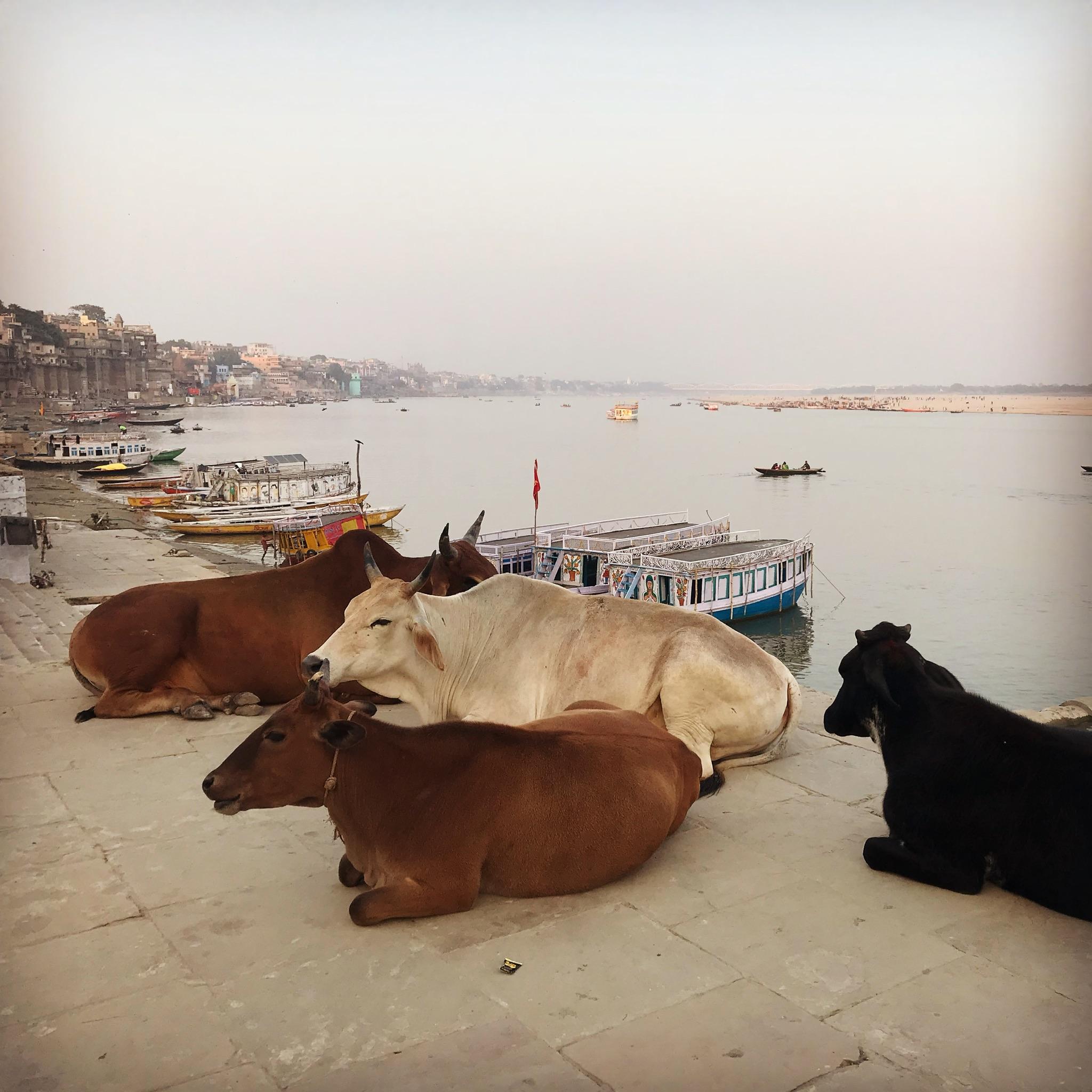 Rok v Ázii. Prečo som ešte stále v Indii?